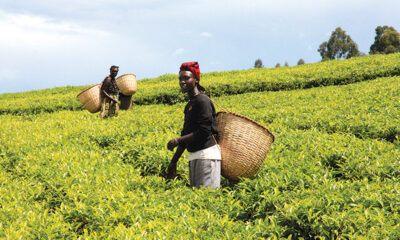 agribusiness in Ghana and Africa